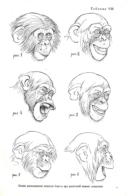 Typical changes in the location of face furrows with different facial expressions of the chimpanzee