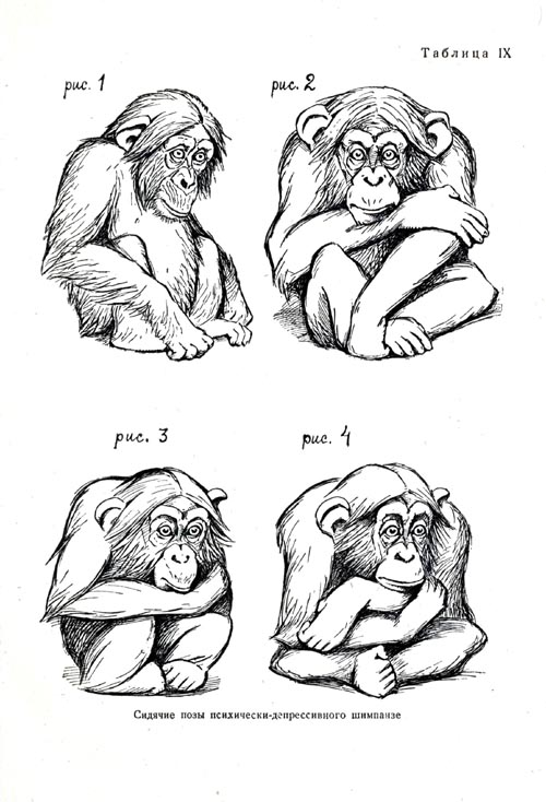 Postures connected with the depression of the chimpanzee